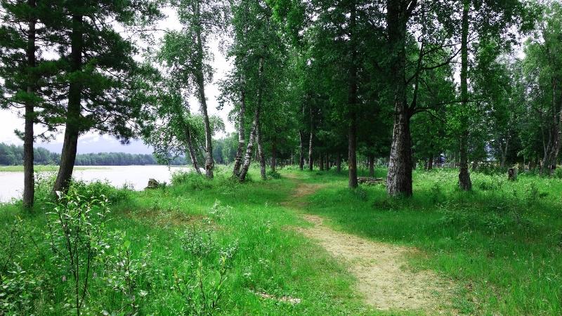 тропинка вдоль реки Снежная (800x450)