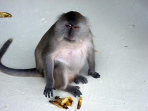 обезьянка на Пхи Пхи