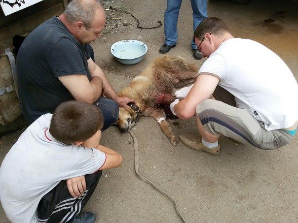 Волонтеры оказывают помощь бездомному псу, живущему на пром.базе, фото: http://prospekt-desires.ru/