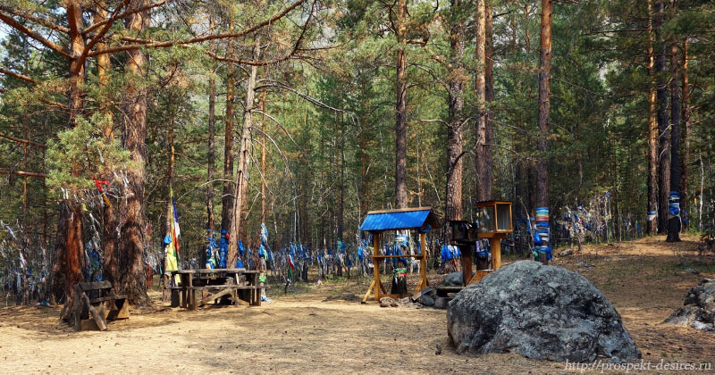 Вход в таинственный лес на Алле