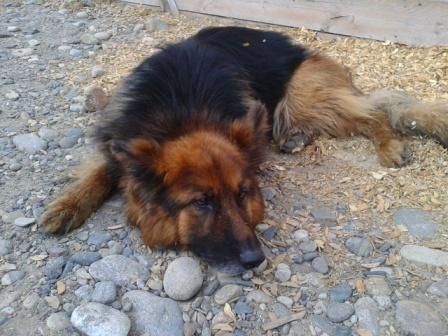 Фото реальной собаки, ее судьба здесь, но ни как не связана с притчей: http://dorogadomoj38.ru/ishhet-hozyaina-otlichnyiy-pes.html