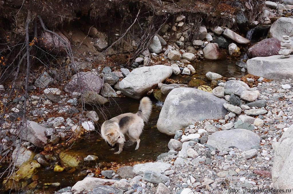 Представительница животного мира помогает искать чашу девственниц