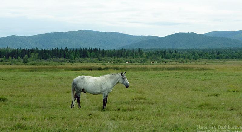 Лошадь практически в тумане
