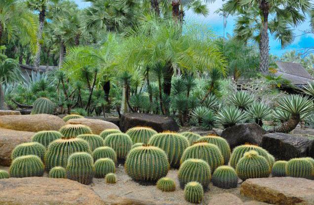 Сад кактусов в Нонг Нуч1