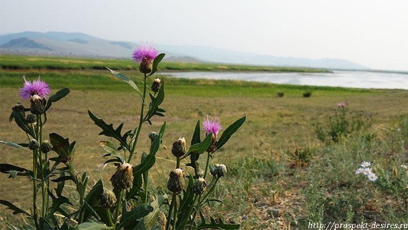 Соленое озеро в Баргузинской долине