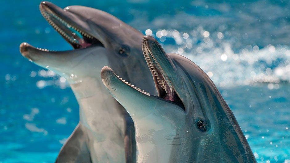 Дельфинарий в Коктебель