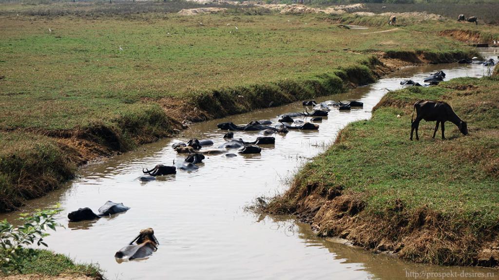 Некоторые обитатели Южного Гоа спасаются от жары так.