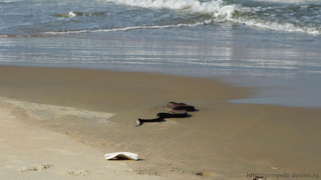 Змея на пляже Гоа
