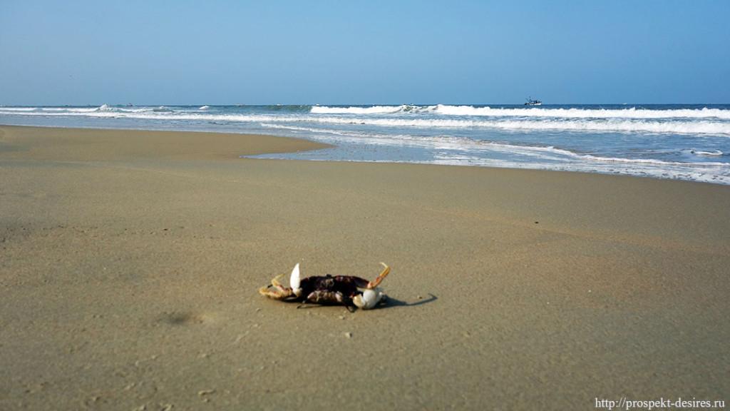 пляж Беталбатим Гоа