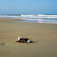 Пляжи Южного Гоа: как выбрать отель на первой линии от моря.