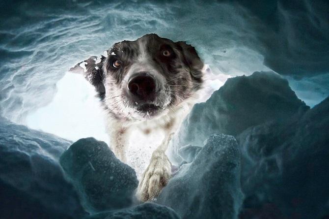 собака спасетель