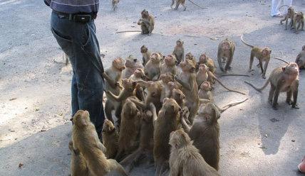 Город обезьян: где он и как туда попасть!