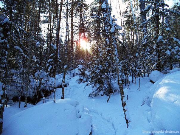 Солнце в лесу Витязь