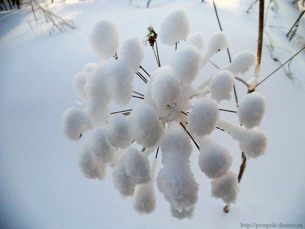 Снежный цветок)