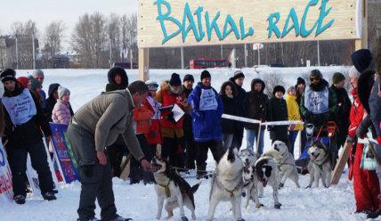 Гонки на собачьих упряжках по Байкалу!