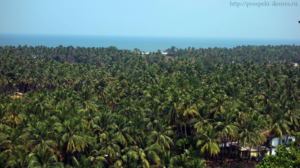 пальмы в Гоа