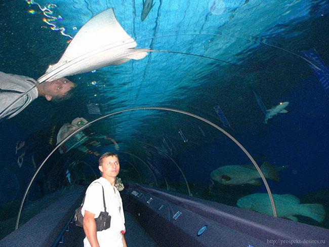 океанариум-скат-акула