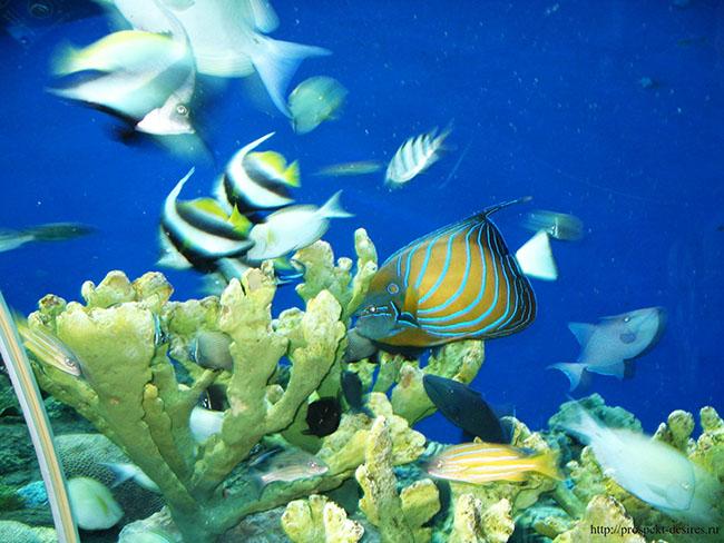 рыбы-в-акеанариуме