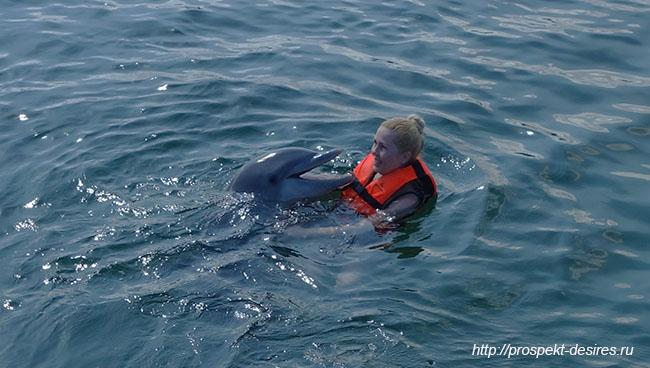экскурсии с дельфинами на варадеро