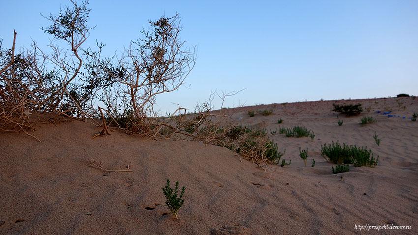 пустыня Гоби Монголия чем заняться
