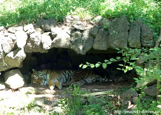 сафари парк Приморье