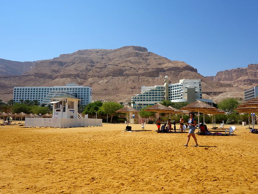 эйн бокек на мертвом море в израиле