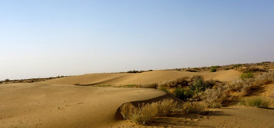 Пустыня Тар. Верблюды. Звездная ночь.